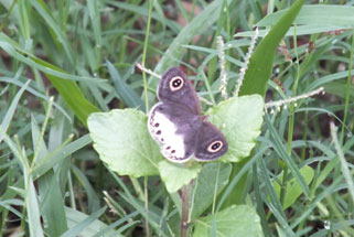 Residents of our Butterfly Garden
