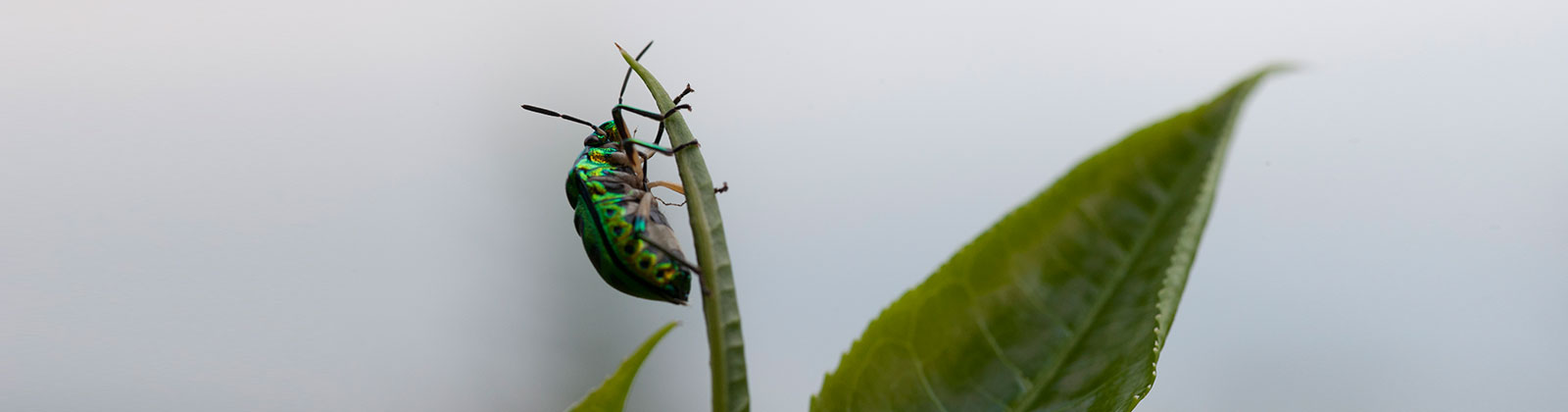 An Insect by a Plant