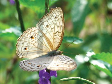 A White Colour Butterfly on a Flower