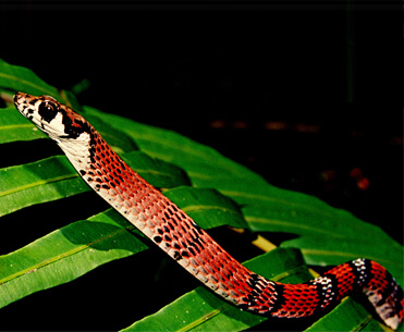 One Earth Nature Club Workshop: A Study of Sri Lankan Snakes