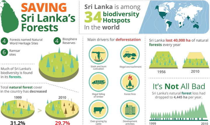Saving Sri Lanka's Forests