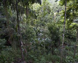 Biodiversity Sri Lanka (BSL)