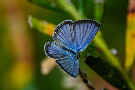 Photograph of a Blue Butterfly
