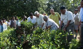 Mr. Merrill J. Fernando and Others Gardening