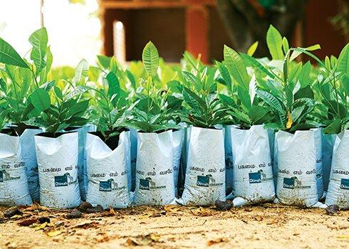 Greening Batticaloa