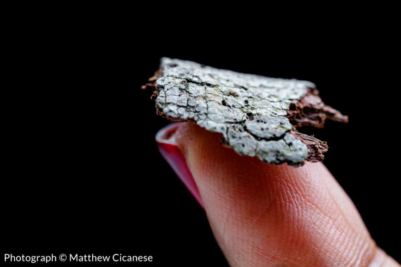 Lichens on the Tip of Finger