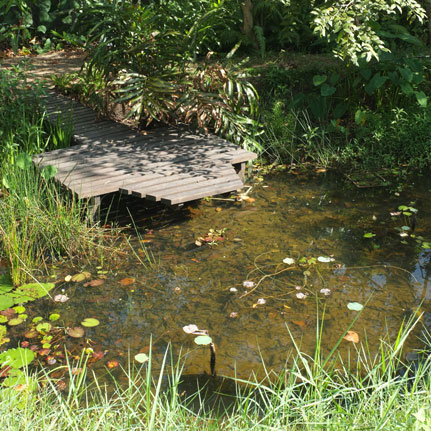 Photograph of a Small Pond