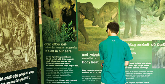 A Foreigner looking at the Guides about Elephants