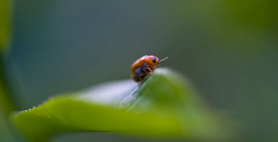 Macro Photography of a Ladybug
