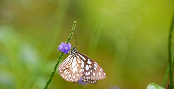 Photograph of a Butterfly near a Purple Colour Flower