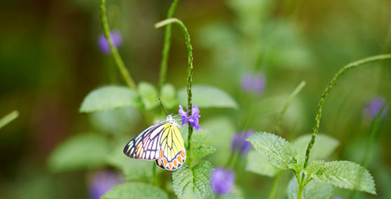 Photograph of a Butterfly in the Butterfly Garden