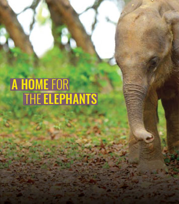 A Home for the Elephants Cover