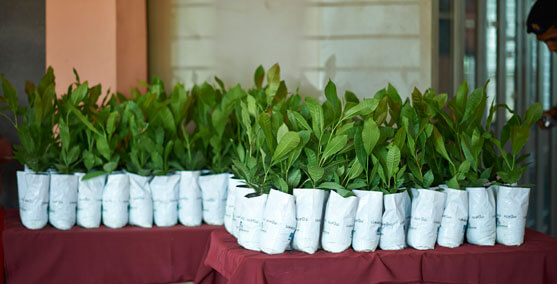 Table Filled with Saplings
