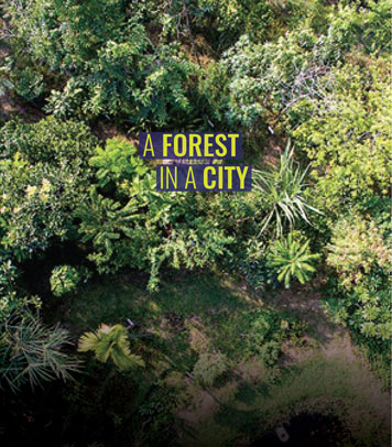 A Forest in a City