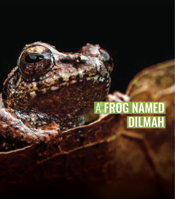 A Frog by the name Dilmah