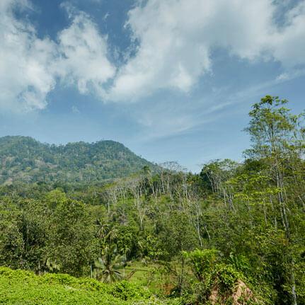 Scenery of a Hillside