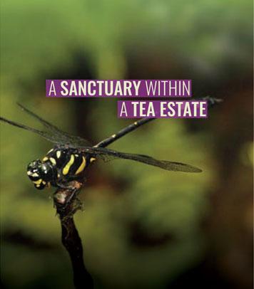 A Sanctuary within a Tea Estate