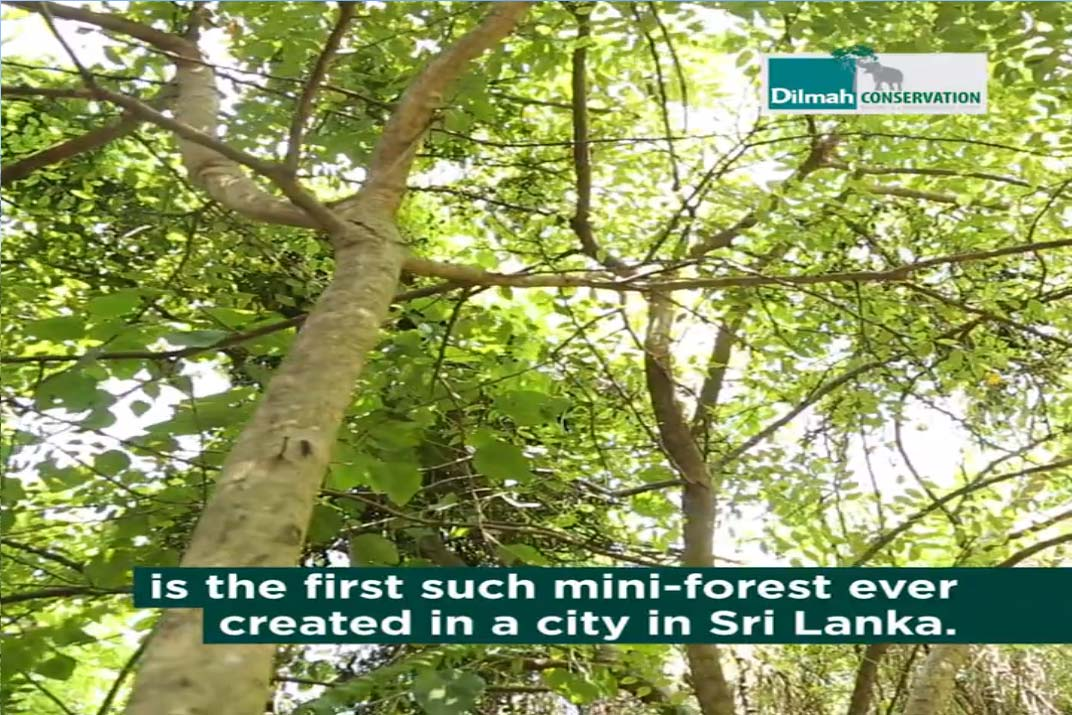 First Mini forest Created in a City of Sri Lanka