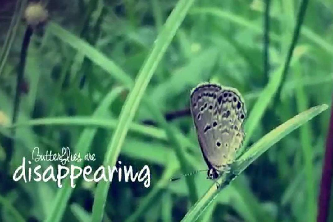 Butterfly with Black Dots on Grass