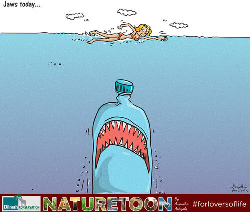 Jaws Today