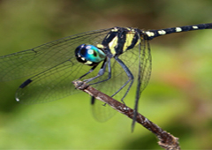 Biodiversity in Hunuwela Estate