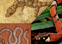 Dilmah Conservation's 'Novel Species Paving the Way for Biodiversity Conservation' Programme Discovers 2 New Species