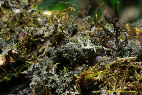 'Lichens: the coolest thing you never heard of' National Geographic team at Dilmah Conservation's lecture on lichens.