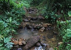 Conserving Endangered Dragonfly Species at Hunuwela Estate