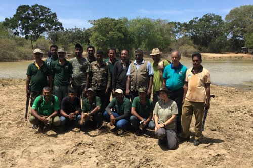 Dilmah Conservation Radio Collar Elephants in Yala to Facilitate Scientific Data Collection