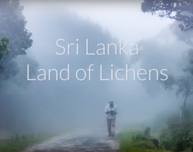 Sri Lanka - Land of Lichens