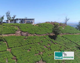 One Year of One Earth Centre- Dilmah Conservation