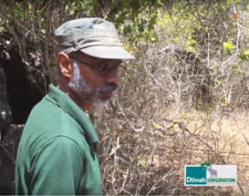 Dilmah Conservation Radiocollar Elephants in Yala to Facilitate Scientific Data Collection